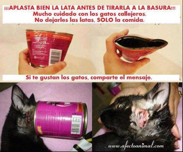 peligrogatoscomandelaslatas_gatosencasa_www-afectoanimal-com