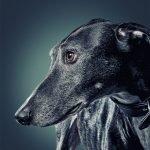 Los retratos más preciosos de perros